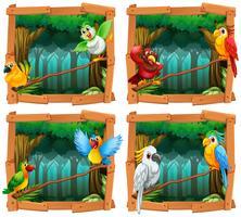 Vilda fåglar i skogen
