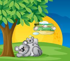 vita björnar