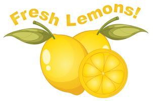 Frische Zitronen auf weißem Hintergrund vektor