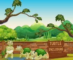 Sköldpadda i den öppna djurparken