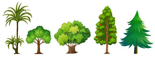 Satz unterschiedlicher Baum