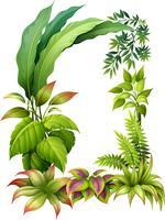 Leafy växter vektor