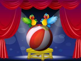 Zwei bunte Papageien auf der Bühne
