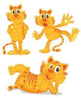 Ingwer-Katzen-Serie vektor