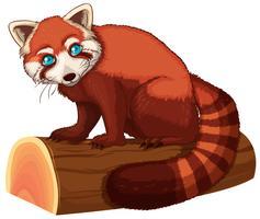 röd panda vektor