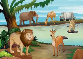 Många vilda djur som bor vid dammen vektor