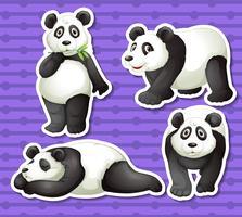 Panda uppsättning vektor