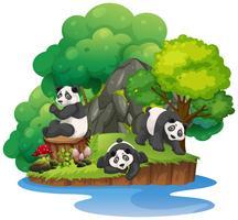 Isolerad natur ö med panda vektor