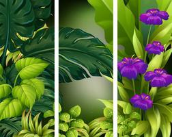 Hintergrundszene mit purpurroten Blumen im Wald vektor
