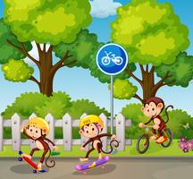 Affe, der Fahrrad und Skateboard fährt