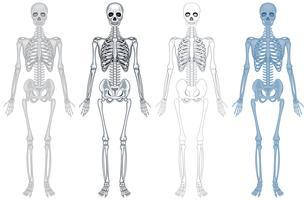 Unterschiedliches Diagramm des menschlichen Skeletts vektor