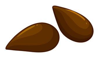 Zwei Samen von Apfelfrüchten