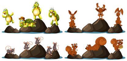 Eine Reihe von Tieren auf dem Felsen