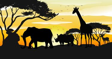 Afrikanische Savanne-Schattenbild-Sonnenuntergang-Szene