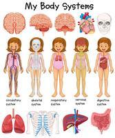 Människokroppssystem diagram