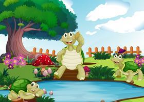 Drei Schildkröten am Teich