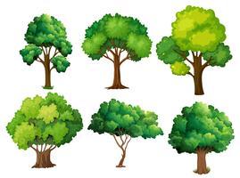 En uppsättning av träd vektor