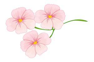 Blumen vektor