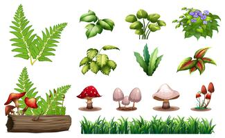 Set av skogsplanter vektor