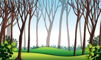Skogsplats med grönt gräs