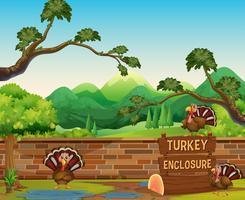 Drei Trukeys im geöffneten Zoo