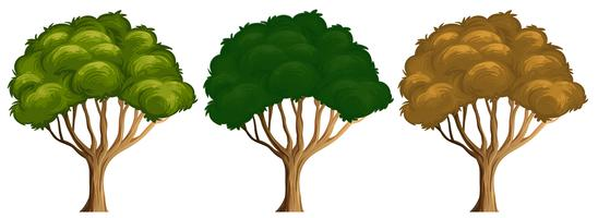 Satz unterschiedliche Farbe des Baums vektor