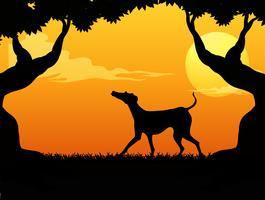 Silhouettieren Sie Szene mit Hund im Park am Sonnenuntergang