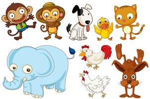 Eine Reihe von flachen Tieren