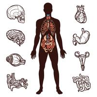 mänsklig anatomi uppsättning