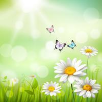 Gänseblümchen-Sommer-Hintergrund