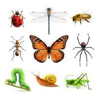 Insekten realistisch gesetzt