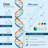 DNA-Infografiken-Set