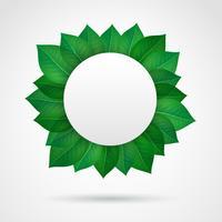 Leere Blätter Rahmen vektor