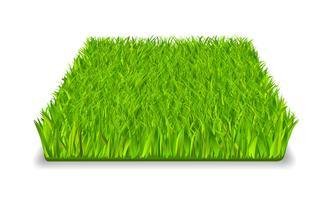 grünes Gras vektor