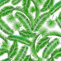 Tropiskt palmträd sömlösa mönster