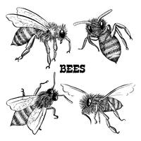 Sammlungen von Honigbienenikonen vektor