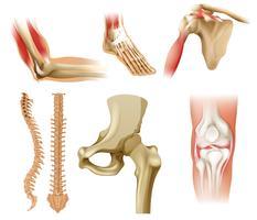 Verschiedene menschliche Knochen vektor