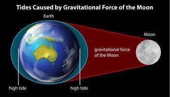 Gezeitenbewegungen auf der Erde