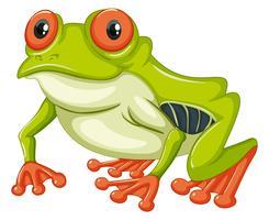 Grüner Frosch mit glücklichem Lächeln vektor
