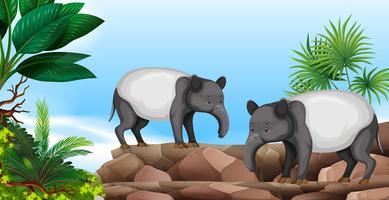 Två anteaters på rock