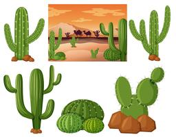 Wüstenfeld mit Kaktuspflanzen vektor