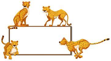 Whiteboard und viele Geparden vektor
