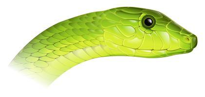 Östliche Grüne Mamba vektor