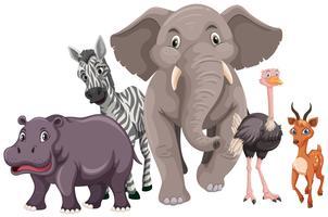 Vilda djur med gott ansikte