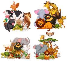 Vier Gruppen wilder Tiere