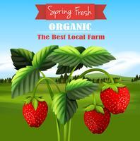 Frische Erdbeeren auf dem Bauernhof vektor