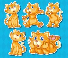 katter vektor
