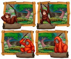 Vier Szenen mit Affen im Dschungel