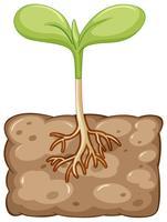 Pflanze wächst aus dem Untergrund