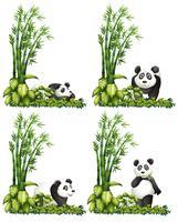 Panda och bambu vektor